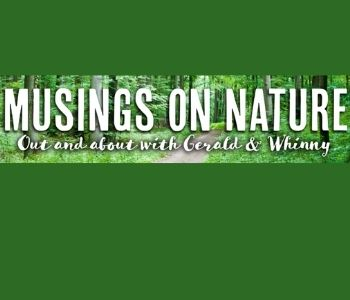 Musing on Nature