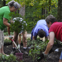 gardeners working to plant flowers in a flower bed