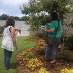 woman standing under a tree talking to another woman looking at the grass