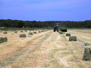 Field of small square bales