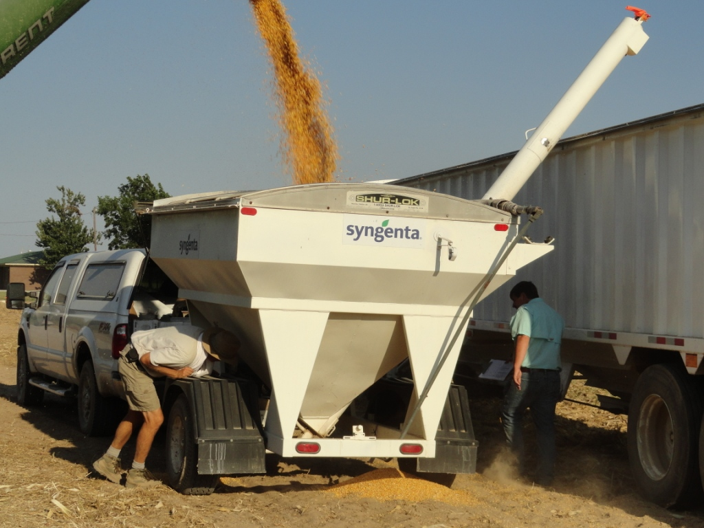 Corn hybrid demo harvest on Boling Farm in Paragould, Arkansas