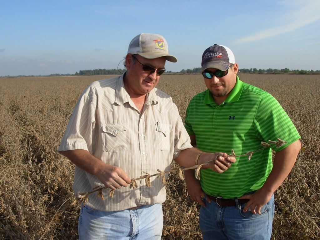 Doug Threlkeld and Justin Threlkeld inspect a plant from their Extension Verification field for disease
