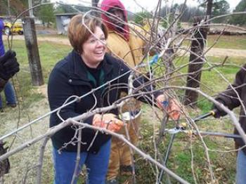 Agent pruning vines at the learning farm