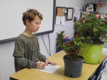 Young boy judging a plant while standing behind a table with several ornamental plants on it; he has pencil and paper laid in front of him
