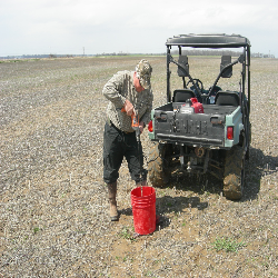 Soil samples being taken for rice