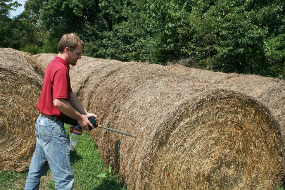 Brian taking a hay sample