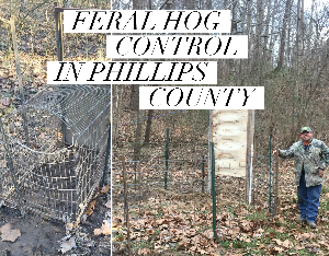 Feral hog cage and enclosure in philiips county arkansas