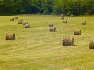 Pasture with Hay bales in Searcy County