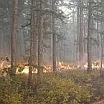 Prescribed Fire - Smoke Management | Air Quality | Environment & Nature | Arkansas Extension