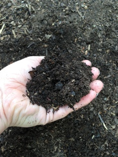 Compost sample in hand