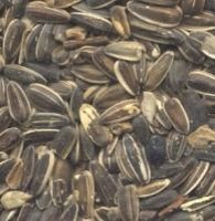 Scattered black striped sunflower seeds with a black and white striped shell.