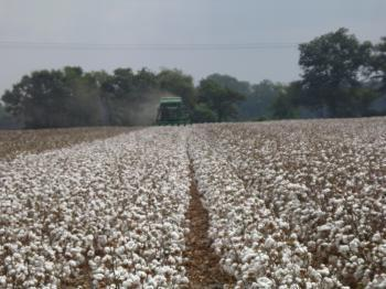 Arkansas Cotton Trial | Row Crops | Farm & Ranch | Arkansas Extension