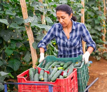 Overview of Produce Safety