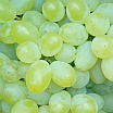 Grapes | Fruits & Nuts | Commercial Horticulture | Arkansas Extension