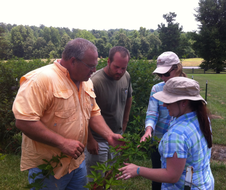 agents and specialists gathered around a blackberry bush in Arkansas