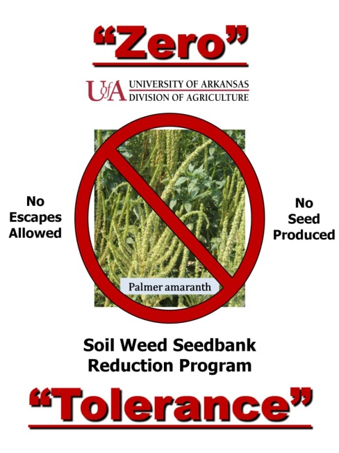 Zero Tolerance Pigweed Managment