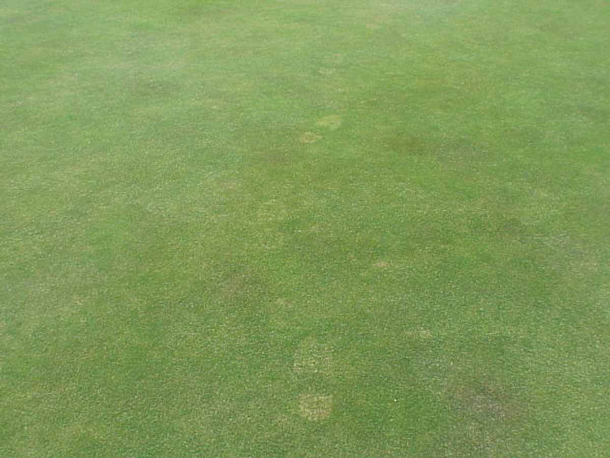 Bentgrass with Rimsulfuron Tracking