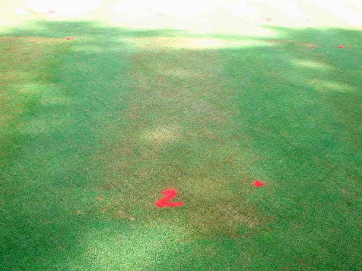 Bentgrass with Oryzalin Direct Application