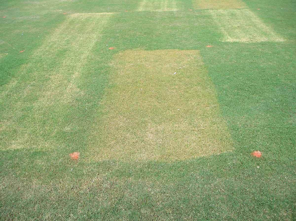 Bermudagrass with Quinclorac Direct Application
