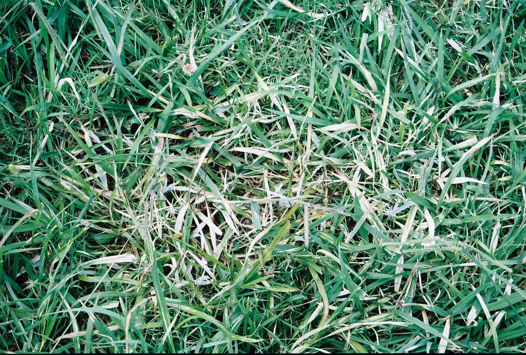 Mixed Grass with Clomazone Direct Application