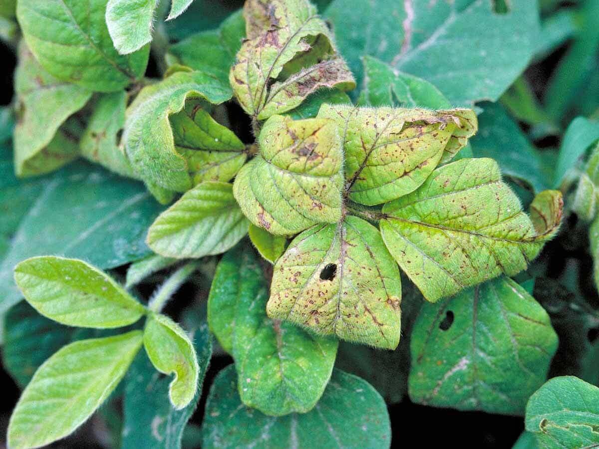 18 Urea Herbicide