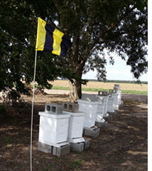 yellow and black Bee Aware flag in apiary