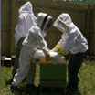 two young beekeepers opening a hive