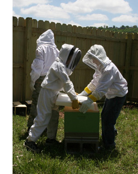 Three young beekeepers in beekeeping suite moving a hive
