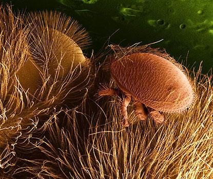 Bee Hive Pests & Diseases