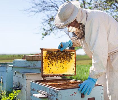 Beekeeping Calendar