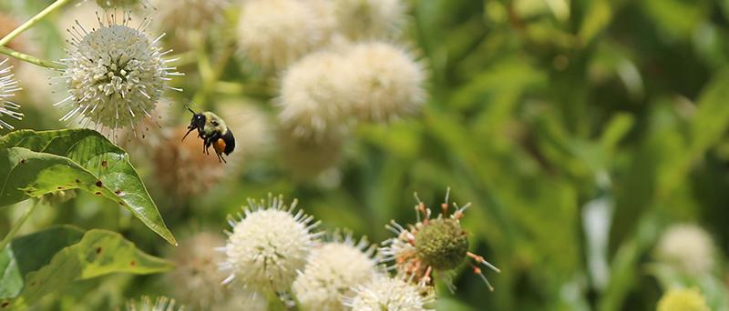 Program to protect bees and crops