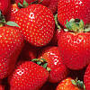 Strawberries | Fruits & Nuts | Arkansas Extension