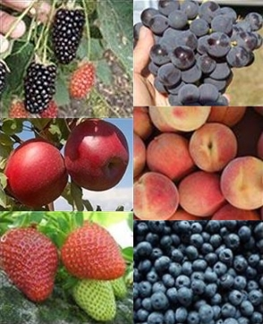 Blackberry, Grapes, Apples, Peaches, Strawberries, Blueberries collage