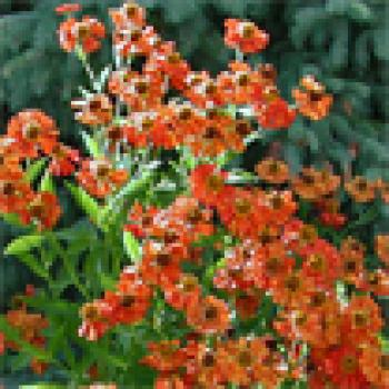 Plant of the week sample | Yard & Garden | Arkansas