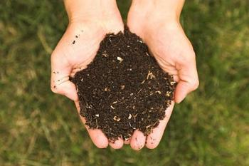Hands palm up holding soil, Green grass in background