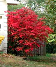 Pictures of a Burning Bush