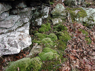 Picture of Moss on rocks
