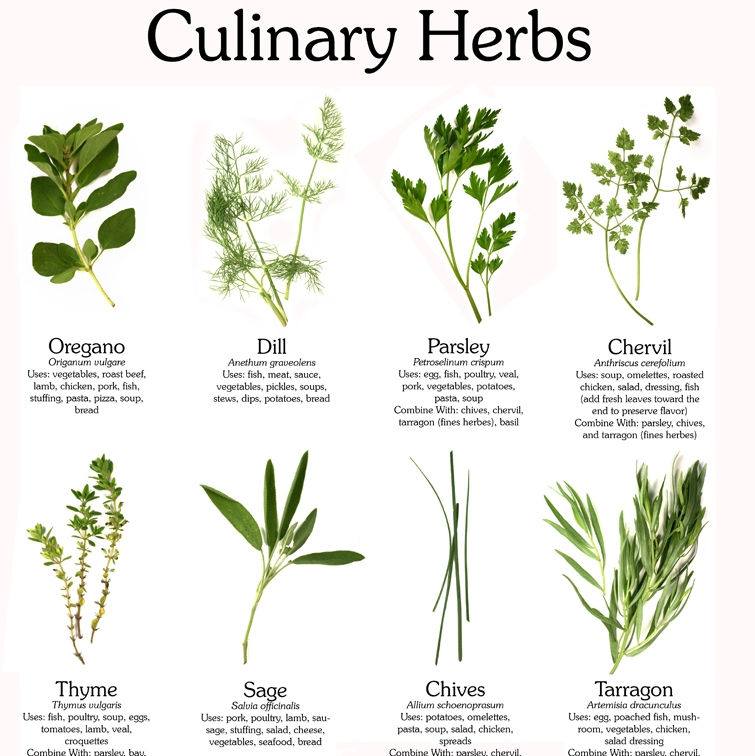 A photo of with various photos of culinary herbs