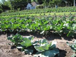 Vegetable gardening | Arkansas Extension